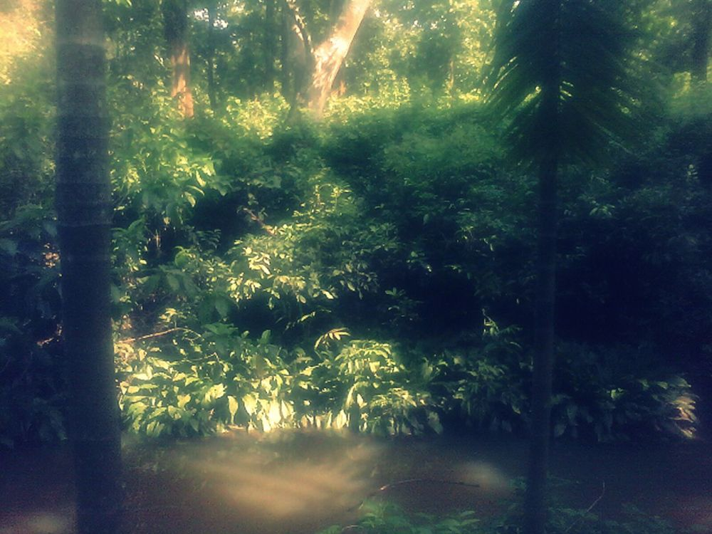 Stream and Forest