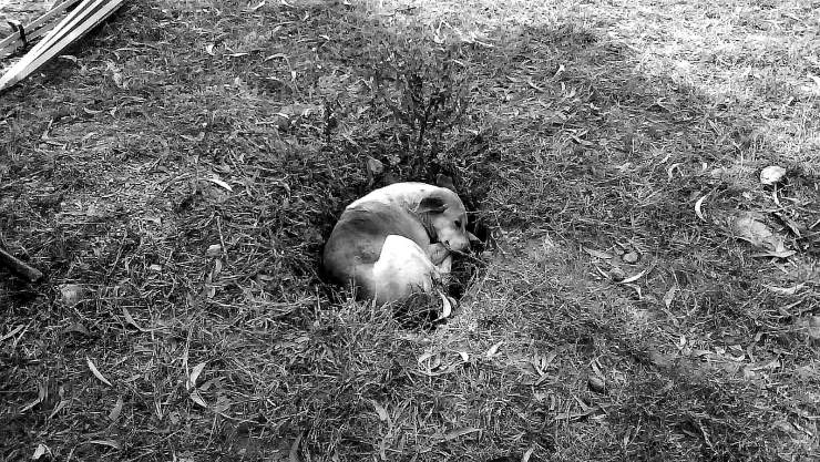 MAdo's Mascot - The Dog in the Hole in the Ground